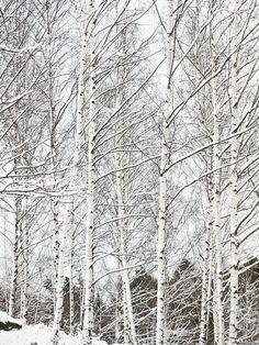 ETC INSPIRATION BLOG SNOW PHOTOGRAPH PHOTOS TREES NATURE VIA STILL INSPIRATION BLOG