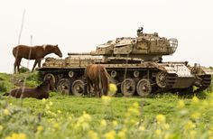 Horses graze near an abandoned Israeli tank in the Golan Heights, on March 8, 2013.