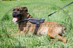 Purchase Nylon Dog Harness with reflective strap for pulling tracking training and sar! The harness is lightweight and has non-restrictive design. Dog Harness, Dog Leash, Cute Puppies, Dogs And Puppies, Dog Training Equipment, Dog Muzzle, Boxer Love, Service Dogs, Dog Supplies