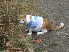 cats wearing tshirts | YOUR CATS WEARING A T-SHIRT! | Flickr - Photo Sharing!