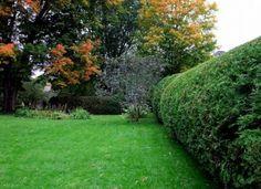 Hedged Yard...