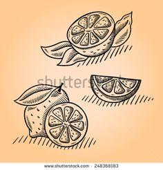 lemon illustration