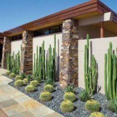 Modern Landscaping, Landscaping Plants, Front Yard Landscaping, Landscaping Ideas, Dessert Landscaping, Desert Landscaping Backyard, Backyard Patio, San Pedro Cacti, Xeriscaping