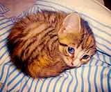 curled up!