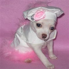 This one will stop traffic! White fabric with rhinestone flowers, pink marabou accents on the harness and hat, D-ring for easy leash attachment, pink rose with rhinestone flower on the hat to tie the whole thing together.
