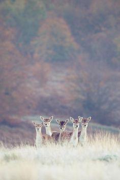 doe, a deer. a female deer Beautiful Creatures, Animals Beautiful, Cute Animals, All Nature, Tier Fotos, Mundo Animal, All Gods Creatures, Nature Animals, Belle Photo