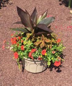 Summer Patio Pot, Matlack Florist