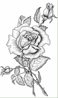 Ideas For Tattoo Flower Drawing Adult Coloring