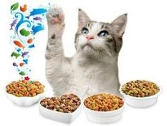 Now if we discuss that whether wet, dry or raw , then it totally depends on your cat, that which type of food your cat likes the most. Some cats like dry food, some wet food, others like raw food and some like the mixture of both wet and dry food. I think wet food is the best choice for your cats because it also provides the necessary water requirements to cat.