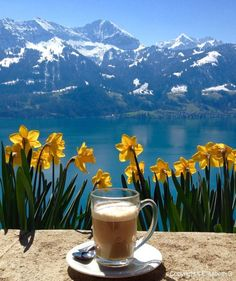 A good cup of coffee in the sun with this view? Coffee Tasting, Coffee Cafe, Coffee Drinks, Coffee Shop, I Love Coffee, Best Coffee, My Coffee, Coffee Travel, Coffee Mugs