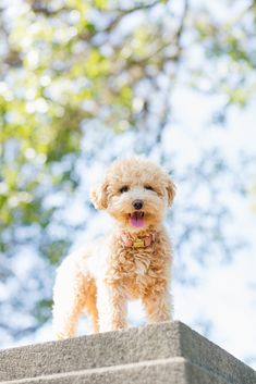 5 Reasons Why You NEED a Maltipoo Puppy. Ranger is the most perfect puppy. She's 5lbs of fluff. A teddy bear dog is exactly what you need to complete your family. Style Inherited Photo Credit: Julia Dags