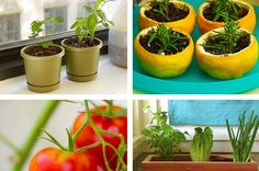 Make Your Own Kitchen Garden With These Awesome Hacks