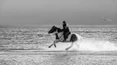 Gallop - Pinned by Mak Khalaf A composition of two photos taken on the same morning. One photo with sky and sea gull the other photo with the riding horse in the water. Fine Art FalckensteinHorseKielMöwebeachgallopgulloceanridingskywaterwaveswinter by winfriedwerner