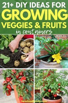 21 Ideas To Grow Veggies And Fruits In Containers
