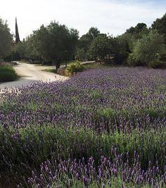 Jardín botánico ecológico.