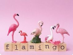 Oh pretty flamingo 😁 Flamingo Craft, Pink Flamingo Party, Flamingo Decor, Flamingo Birthday, Pink Flamingos, Pink Quotes, Pink Bird, Idee Diy, Pink Feathers