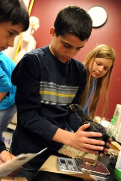 """Seventh grader James Cazares, 12, weighs a hen Oct. 10 at Skyview Middle School in Falcon School District 49. Cazares and two classmates weighed the hen at 327 grams, a 226-gram gain since Sept. 16. """"We're seeing what will happen over time to the chick's mass in response to nutrient consumption,"""" said Cazares. The students are also measuring lima bean plant growth under red, blue, green and white lights, as well as temperature changes in decaying compost."""