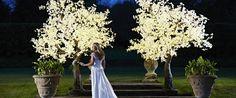 Maple Trees | Twilight Trees