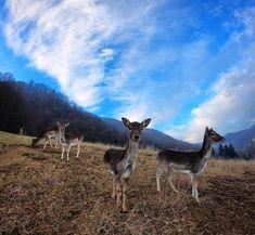 Kje si srna?  #srna #Jelenovgreben #Olimje #igslovenia #jazpapojdem #bluesky #ohdeer #deer #countryside Oh Deer, Countryside, Places, Animals, Instagram, Animales, Animaux, Animal, Animais