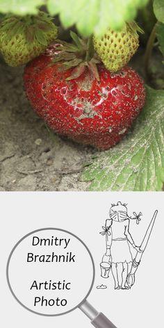 Dmitry Brazhnik   Artistic Photo   Printable   Design   Interior   Instant Download   Fruits Photography (fragment)   Full Color Strawberry Ripe Red Harvest Green Summer Garden Leaves Digital Poster Print Photo Digital Image   №D-4006