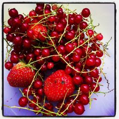 Strawberries and red berries from our allotment