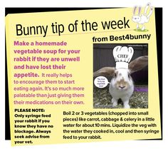 Bunny tip week - 19 Make a homemade vegetable soup for your rabbit if they are unwell and have lost their appetite.