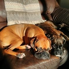 K9 Kelp | Best Buds! #boxerdog #doglover #dogofinstagram