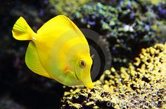 Tropical Fish on Pinterest Tropical Fish, Aquarium and Tropical ...