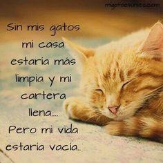 Sin mis gatos