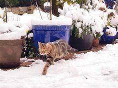 Im Schnee ❄️❤️