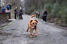 A kutya kiment sétálni, véletlenül lefutotta a félmaratont, és 7. lett