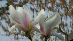 Michels nieuwe blog: update van mijn #stadstuin Plants, Blog, Blogging, Plant, Planets