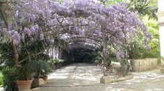 Jardin Botanico La concepcion | fotos de Málaga Capital