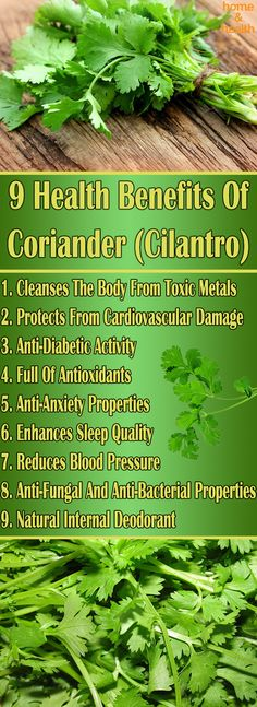 Coriander or Cilantro, is a herb with wonderful aroma. Growing your own coriander is very easy and besides the general purposes, this herb provides some incredible health benefits.