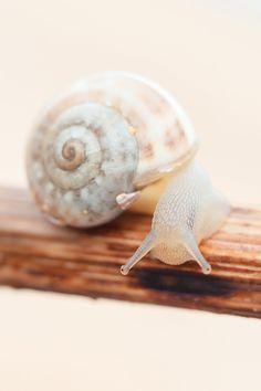 Nature Animals, Animals And Pets, Baby Animals, Cute Animals, Beautiful Creatures, Animals Beautiful, Pet Snails, Rare Albino Animals, Snail Art