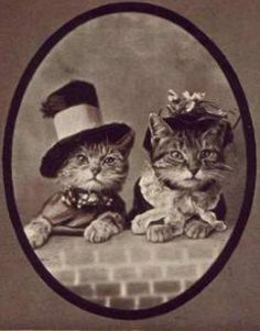 amazing vintage cat's pictures