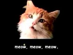 Now it's time to watch a bunch of cats dancing to an EDM version of the Meow Mix jingle.