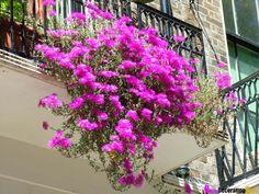 DIY Friday: How to Build a City Garden on Your Balcony