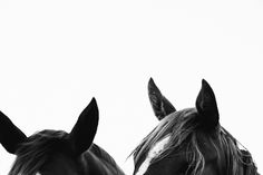 Pampa Horses by Victoria Aguirre All The Pretty Horses, Beautiful Horses, Animals Beautiful, Cute Animals, Horse Love, Horse Girl, Equine Photography, Animal Photography, Cavalo Wallpaper