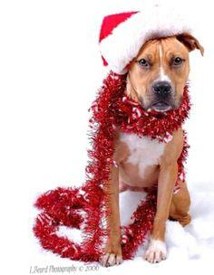 #Christmas #Winter #Snow dog