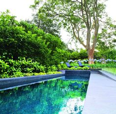 Screening plants: creating your outdoor sanctuary - a total concept pool project with screening plants Backyard Fences, Garden Fencing, Garden Landscaping, Mesh Pool Fence, Plants Around Pool, Lady Banks Rose, Screen Plants, Types Of Fences, Beautiful Pools