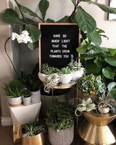 Indoor Garden, Indoor Plants, Plants Quotes, Quotes About Plants, Cactus Quotes, Felt Letter Board, Decoration Plante, Plant Aesthetic, Garden Quotes
