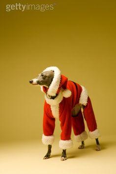 ~ Santa baby Wally ~