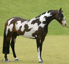 """This horse has """"horse"""" written on him. (It's been photoshopped but it's still cool.)"""