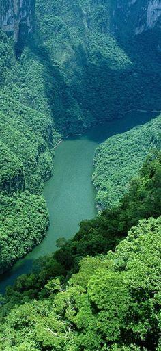 jungle terrain