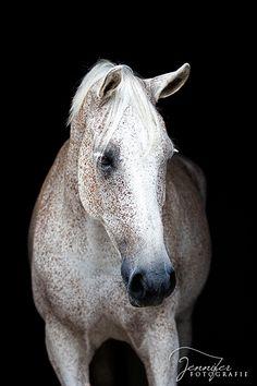 Flea bitten grey like my Mom's horse Angel
