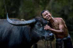 Relationship. Bull's Eye. Water buffalo ...