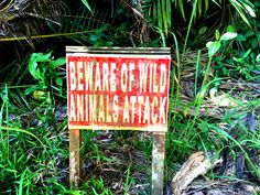 A sign which you just don't want to see. Alone. In the rainforest. When the sunset is coming.  #Malaysia Wild Animals Attack, Animal Attack, Sign, Sunset, Gallery, Outdoor Decor, Sunsets, Roof Rack, Signs