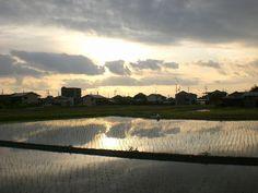 菰野町西菰野地区「水鏡、朝焼け平成25年5月19日撮影