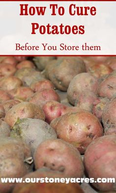 Curing potatoes before winter storage is an important process that will help assure longer storing times for your potato crop.